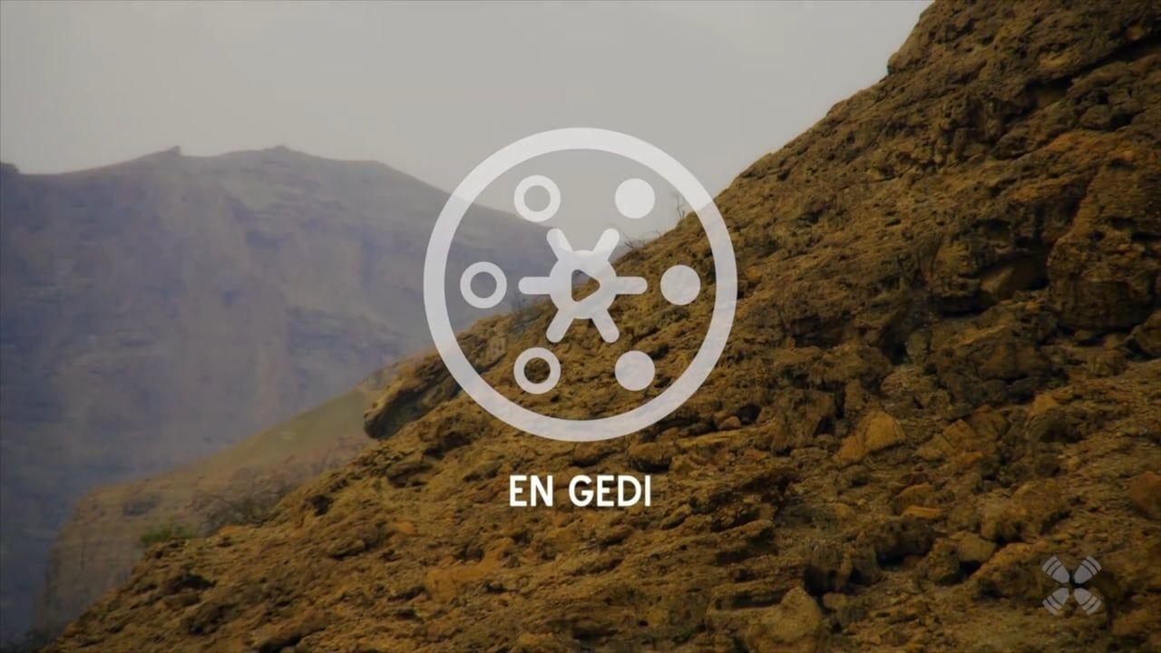 Experience En Gedi