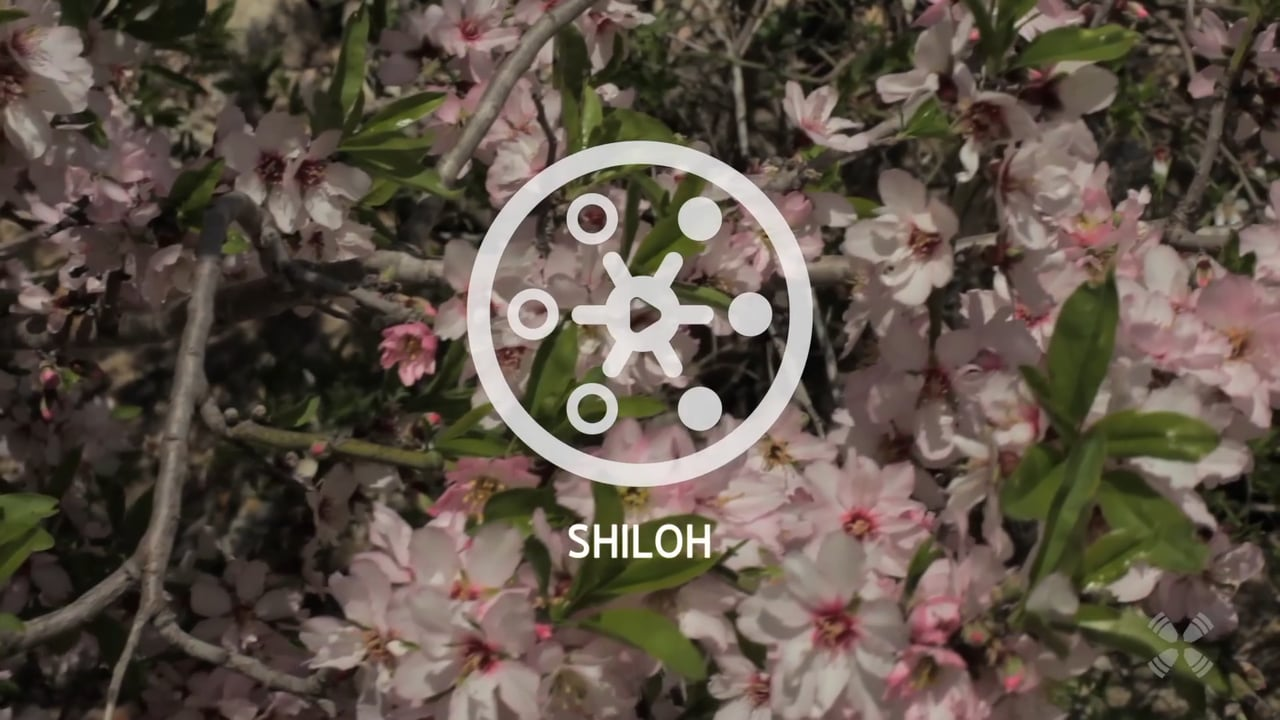 Experience Shiloh